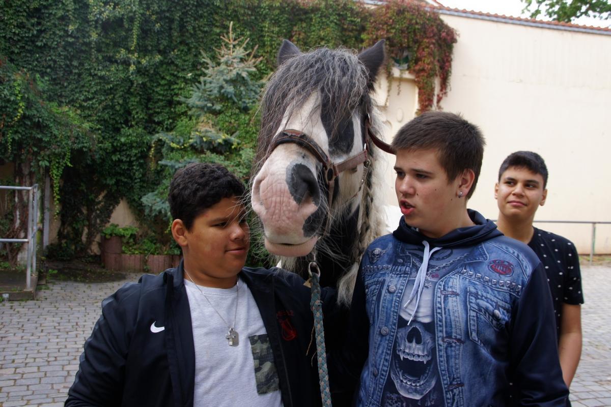 bewegung-pferde-00006