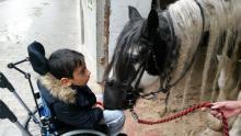 bewegung-pferde-00001