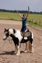 bewegung-pferde-00003