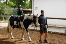bewegung-pferde-00008