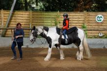 bewegung-pferde-00009